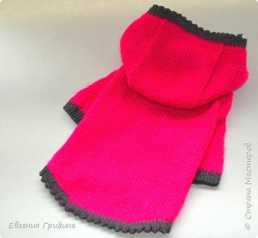 Яркий, теплый свитерок для собачки :)  Нитки акриловые, полушерсть.  фото 4