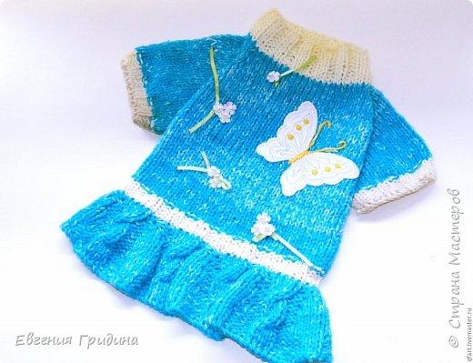 Яркий, теплый свитерок для собачки :)  Нитки акриловые, полушерсть.  фото 7