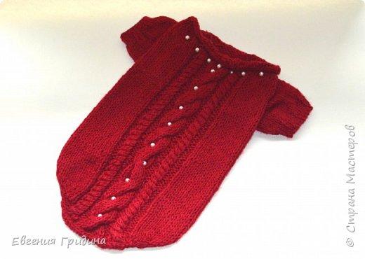 Яркий, теплый свитерок для собачки :)  Нитки акриловые, полушерсть.  фото 2