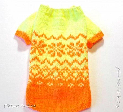 Яркий, теплый свитерок для собачки :)  Нитки акриловые, полушерсть.  фото 1