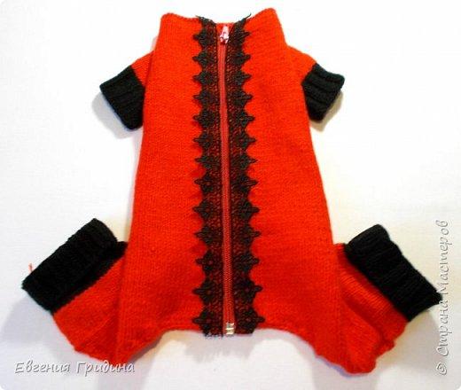 Яркий, теплый свитерок для собачки :)  Нитки акриловые, полушерсть.  фото 6