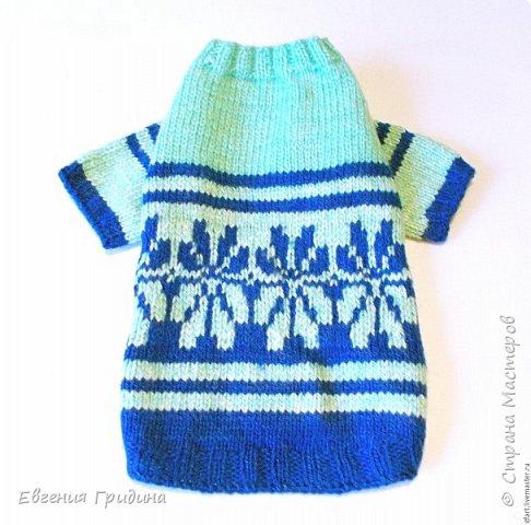Яркий, теплый свитерок для собачки :)  Нитки акриловые, полушерсть.  фото 5