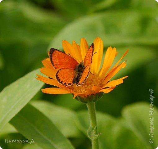 Летнего всем настроения! Пришел ко мне долгожданный ОТПУСК!!! И проведу я его на дачке.... в чудесном цветочно-насекомышном обществе, не считая мужа и мамы.... ДЕЛЮСЬ НАСТРОЕНИЕМ!!! фотков будет много, простите! фото 1