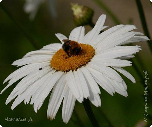 Летнего всем настроения! Пришел ко мне долгожданный ОТПУСК!!! И проведу я его на дачке.... в чудесном цветочно-насекомышном обществе, не считая мужа и мамы.... ДЕЛЮСЬ НАСТРОЕНИЕМ!!! фотков будет много, простите! фото 2