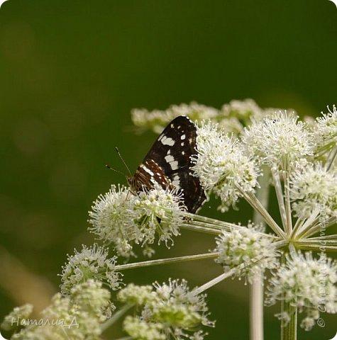 Летнего всем настроения! Пришел ко мне долгожданный ОТПУСК!!! И проведу я его на дачке.... в чудесном цветочно-насекомышном обществе, не считая мужа и мамы.... ДЕЛЮСЬ НАСТРОЕНИЕМ!!! фотков будет много, простите! фото 5