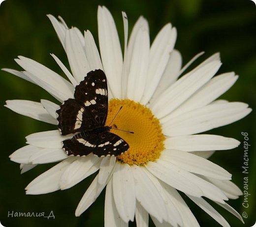 Летнего всем настроения! Пришел ко мне долгожданный ОТПУСК!!! И проведу я его на дачке.... в чудесном цветочно-насекомышном обществе, не считая мужа и мамы.... ДЕЛЮСЬ НАСТРОЕНИЕМ!!! фотков будет много, простите! фото 6