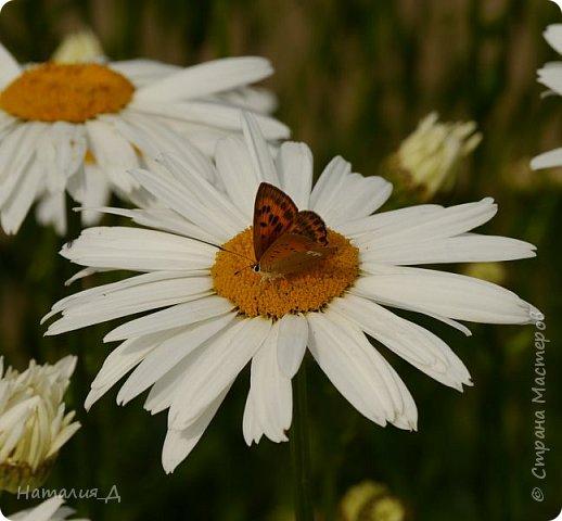 Летнего всем настроения! Пришел ко мне долгожданный ОТПУСК!!! И проведу я его на дачке.... в чудесном цветочно-насекомышном обществе, не считая мужа и мамы.... ДЕЛЮСЬ НАСТРОЕНИЕМ!!! фотков будет много, простите! фото 7