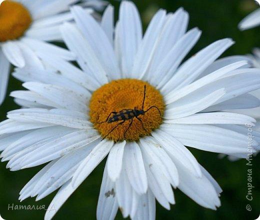Летнего всем настроения! Пришел ко мне долгожданный ОТПУСК!!! И проведу я его на дачке.... в чудесном цветочно-насекомышном обществе, не считая мужа и мамы.... ДЕЛЮСЬ НАСТРОЕНИЕМ!!! фотков будет много, простите! фото 10