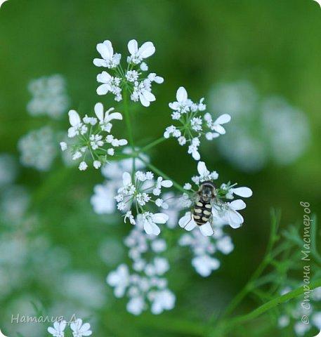 Летнего всем настроения! Пришел ко мне долгожданный ОТПУСК!!! И проведу я его на дачке.... в чудесном цветочно-насекомышном обществе, не считая мужа и мамы.... ДЕЛЮСЬ НАСТРОЕНИЕМ!!! фотков будет много, простите! фото 14