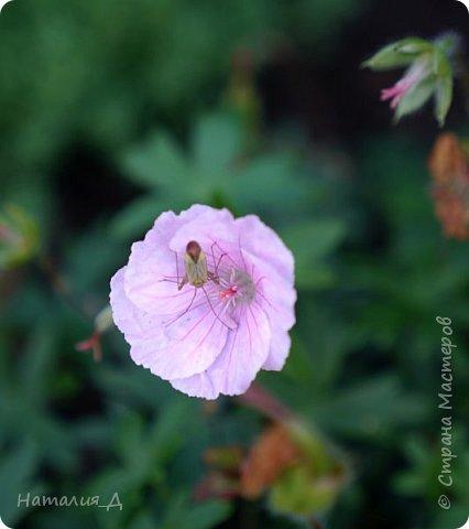 Летнего всем настроения! Пришел ко мне долгожданный ОТПУСК!!! И проведу я его на дачке.... в чудесном цветочно-насекомышном обществе, не считая мужа и мамы.... ДЕЛЮСЬ НАСТРОЕНИЕМ!!! фотков будет много, простите! фото 15