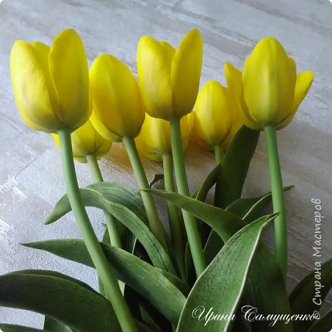 Желтые тюльпаны фото 3