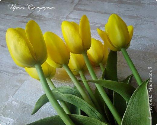 Желтые тюльпаны фото 2