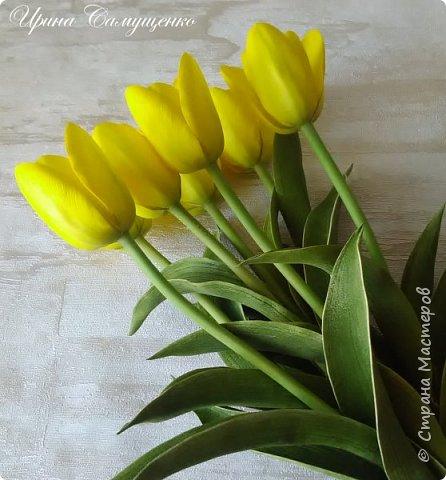Желтые тюльпаны фото 1