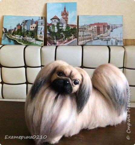 Собака из шерсти фото 1
