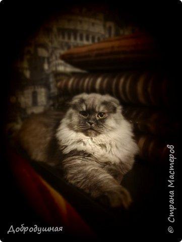 Кто смотрел записи в моем блоге - тот знает кто это =))))) Да, это моя Плюшка - шотландская прямоухая очень красивого шоколадного окраса. на фото она за день до рождения котят охлаждается на мокром полотенце. это фото было сделано ровно год назад. В тот момент я была дома. Болела ветрянкой (да-да, в 29 лет тоже можно заболеть ветрянкой и это было ооооооочень плохо - врагу не пожелаю). на улице +43 в тени (кондиционера у нас еще нет, а все окна выходят на солнечную сторону и солнце светит от рассвета до заката), дома отключили всякую воду - технические работы видите ли они проводили..... А на следующий день мы ждали появление малышей.... Роды были тяжелыми.... Пришлось колоть кошке специальные уколы (сразу предупрежу что все было сделано как надо - моя подруга в этом спец) для стимуляции. в итоге на свет появилось двое малышей. Серая девчушка и коричневый (я бы даже сказала - золотой) мальчуган =) но... к сожалению мальчишка родился мертвым..... я плакала..... кошка все поняла сразу и окружила всей своей любовью свою крошку....  фото 35