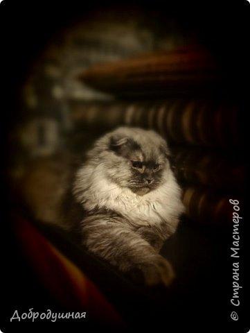 Кто смотрел записи в моем блоге - тот знает кто это =))))) Да, это моя Плюшка - шотландская прямоухая очень красивого шоколадного окраса. на фото она за день до рождения котят охлаждается на мокром полотенце. это фото было сделано ровно год назад. В тот момент я была дома. Болела ветрянкой (да-да, в 29 лет тоже можно заболеть ветрянкой и это было ооооооочень плохо - врагу не пожелаю). на улице +43 в тени (кондиционера у нас еще нет, а все окна выходят на солнечную сторону и солнце светит от рассвета до заката), дома отключили всякую воду - технические работы видите ли они проводили..... А на следующий день мы ждали появление малышей.... Роды были тяжелыми.... Пришлось колоть кошке специальные уколы (сразу предупрежу что все было сделано как надо - моя подруга в этом спец) для стимуляции. в итоге на свет появилось двое малышей. Серая девчушка и коричневый (я бы даже сказала - золотой) мальчуган =) но... к сожалению мальчишка родился мертвым..... я плакала..... кошка все поняла сразу и окружила всей своей любовью свою крошку....  фото 36