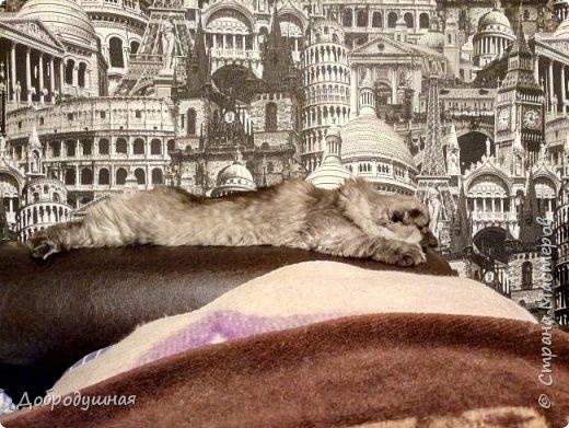 Кто смотрел записи в моем блоге - тот знает кто это =))))) Да, это моя Плюшка - шотландская прямоухая очень красивого шоколадного окраса. на фото она за день до рождения котят охлаждается на мокром полотенце. это фото было сделано ровно год назад. В тот момент я была дома. Болела ветрянкой (да-да, в 29 лет тоже можно заболеть ветрянкой и это было ооооооочень плохо - врагу не пожелаю). на улице +43 в тени (кондиционера у нас еще нет, а все окна выходят на солнечную сторону и солнце светит от рассвета до заката), дома отключили всякую воду - технические работы видите ли они проводили..... А на следующий день мы ждали появление малышей.... Роды были тяжелыми.... Пришлось колоть кошке специальные уколы (сразу предупрежу что все было сделано как надо - моя подруга в этом спец) для стимуляции. в итоге на свет появилось двое малышей. Серая девчушка и коричневый (я бы даже сказала - золотой) мальчуган =) но... к сожалению мальчишка родился мертвым..... я плакала..... кошка все поняла сразу и окружила всей своей любовью свою крошку....  фото 39