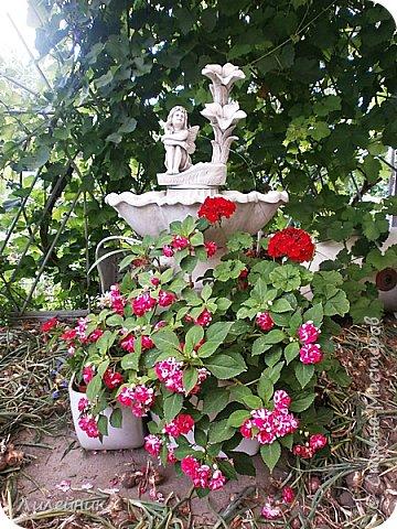 Здравствуйте,все любители цветов! С приходом весны, я как и большинство любителей цветов погружаемся в цветочно-посевные хлопоты; сеем семена,черенкуем вазоны. Всходы растений вырастают, черенки хорошо укоренились в стаканчиках и начинаешь ломать голову-как, куда, и с кем все это посадить. С тары идет вход все- ведра, тазики, дырявые старые миски, ящики и тд, и тп.Наступает июнь, июль, смотришь какая композиция получилась, а какая нет. Смотрим. В ящику посажены две пеларгонии и бальзамин из коллекции Сафари(сеянец прошлого года). фото 7