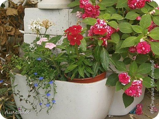 Здравствуйте,все любители цветов! С приходом весны, я как и большинство любителей цветов погружаемся в цветочно-посевные хлопоты; сеем семена,черенкуем вазоны. Всходы растений вырастают, черенки хорошо укоренились в стаканчиках и начинаешь ломать голову-как, куда, и с кем все это посадить. С тары идет вход все- ведра, тазики, дырявые старые миски, ящики и тд, и тп.Наступает июнь, июль, смотришь какая композиция получилась, а какая нет. Смотрим. В ящику посажены две пеларгонии и бальзамин из коллекции Сафари(сеянец прошлого года). фото 8
