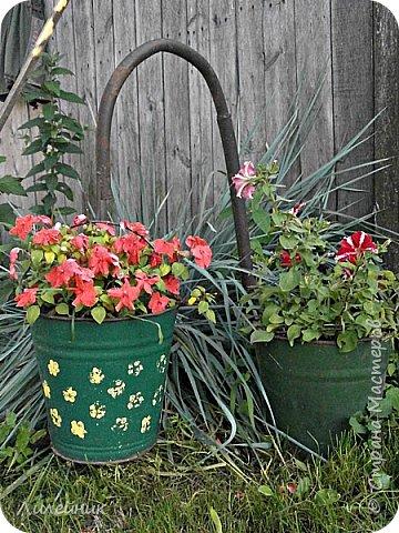 Здравствуйте,все любители цветов! С приходом весны, я как и большинство любителей цветов погружаемся в цветочно-посевные хлопоты; сеем семена,черенкуем вазоны. Всходы растений вырастают, черенки хорошо укоренились в стаканчиках и начинаешь ломать голову-как, куда, и с кем все это посадить. С тары идет вход все- ведра, тазики, дырявые старые миски, ящики и тд, и тп.Наступает июнь, июль, смотришь какая композиция получилась, а какая нет. Смотрим. В ящику посажены две пеларгонии и бальзамин из коллекции Сафари(сеянец прошлого года). фото 16