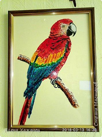 Птичий рай фото 2
