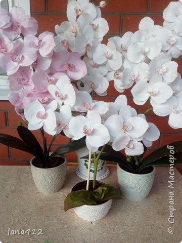 всем привет! сегодня у меня орхидеи из фома.( обкатка ствола и бутончики  из х\ф) фото 1