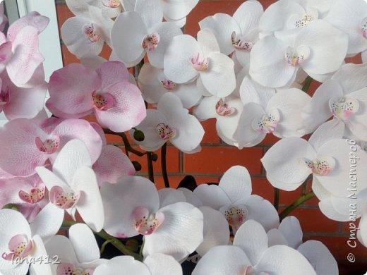 всем привет! сегодня у меня орхидеи из фома.( обкатка ствола и бутончики  из х\ф) фото 4