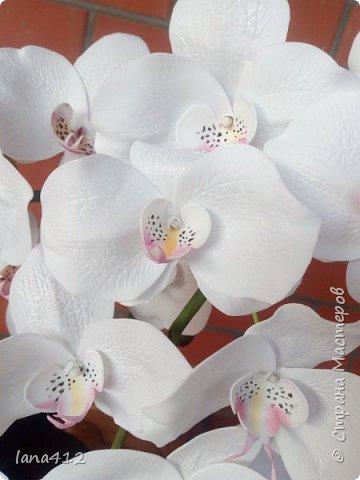 всем привет! сегодня у меня орхидеи из фома.( обкатка ствола и бутончики  из х\ф) фото 3