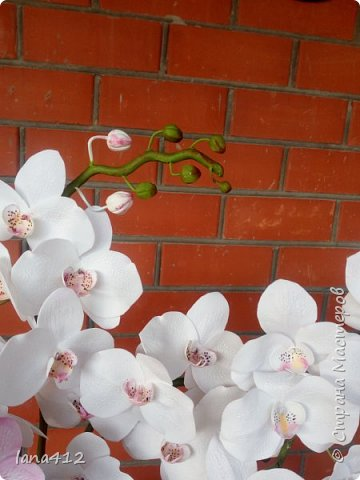 всем привет! сегодня у меня орхидеи из фома.( обкатка ствола и бутончики  из х\ф) фото 10