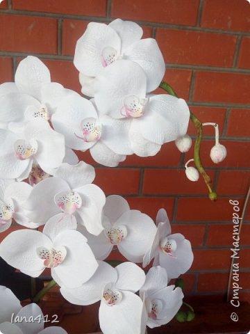 всем привет! сегодня у меня орхидеи из фома.( обкатка ствола и бутончики  из х\ф) фото 9