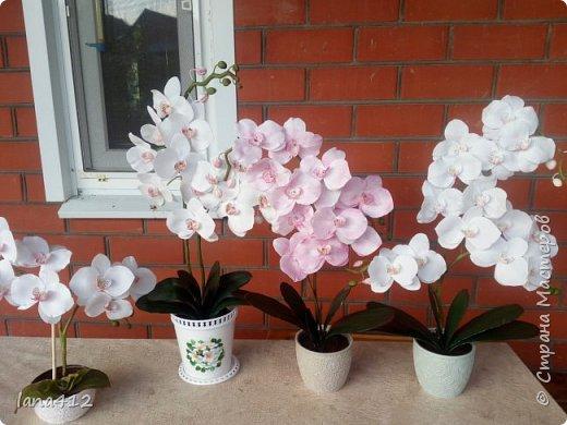 всем привет! сегодня у меня орхидеи из фома.( обкатка ствола и бутончики  из х\ф) фото 5