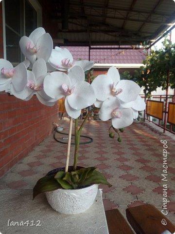 всем привет! сегодня у меня орхидеи из фома.( обкатка ствола и бутончики  из х\ф) фото 8