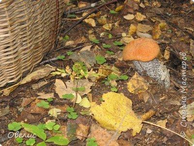 Люблю тихую охоту. Искать грибы в лесу так здорово! фото 9