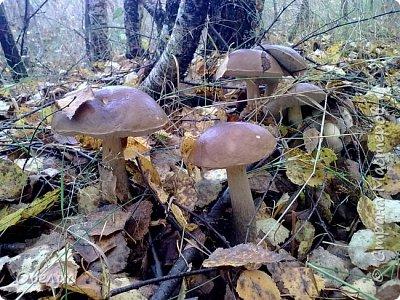 Люблю тихую охоту. Искать грибы в лесу так здорово! фото 10