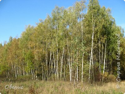Люблю тихую охоту. Искать грибы в лесу так здорово! фото 1