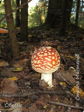 Люблю тихую охоту. Искать грибы в лесу так здорово! фото 3