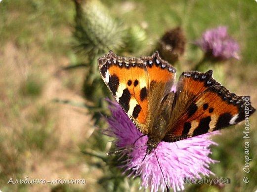 Июль был солнечным и жарким.В этом году был флешмоб бабочек и других насекомых! Я хочу поделиться с вами этой красотой. фото 1