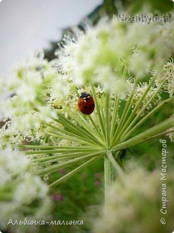 Июль был солнечным и жарким.В этом году был флешмоб бабочек и других насекомых! Я хочу поделиться с вами этой красотой. фото 5