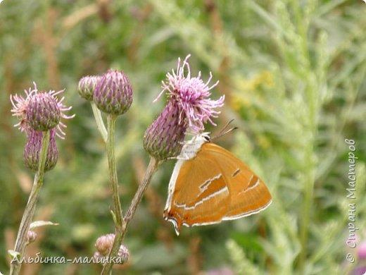 Июль был солнечным и жарким.В этом году был флешмоб бабочек и других насекомых! Я хочу поделиться с вами этой красотой. фото 3