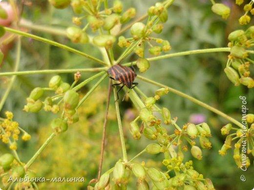 Июль был солнечным и жарким.В этом году был флешмоб бабочек и других насекомых! Я хочу поделиться с вами этой красотой. фото 7