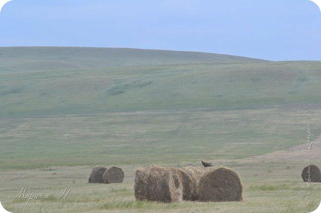 Сегодня приглашаю погулять с нами по бескрайним степям Хакасии. фото 8