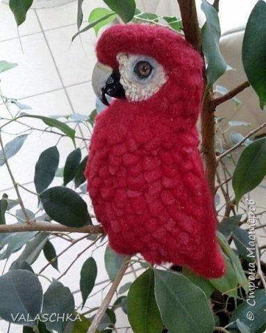 Я очень люблю попугаев Ара. Поэтому решила свалять такую птицу из шерсти. А почему бы и нет... фото 3