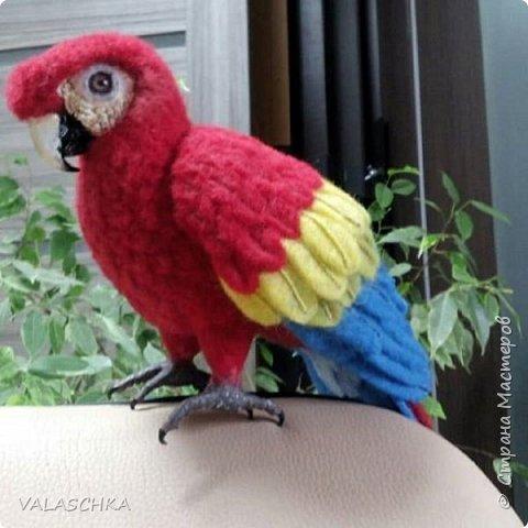 Я очень люблю попугаев Ара. Поэтому решила свалять такую птицу из шерсти. А почему бы и нет... фото 7