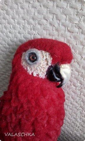 Я очень люблю попугаев Ара. Поэтому решила свалять такую птицу из шерсти. А почему бы и нет... фото 1