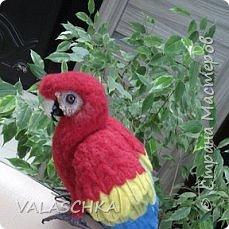 Я очень люблю попугаев Ара. Поэтому решила свалять такую птицу из шерсти. А почему бы и нет... фото 6