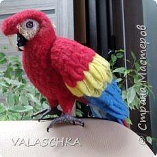 Я очень люблю попугаев Ара. Поэтому решила свалять такую птицу из шерсти. А почему бы и нет... фото 8