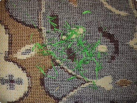 Эти курочки-корзинки я делала на Пасху детям, которые приходили к нам в гости. В середину клала крашеное яичко и конфеты. но вы можете положить что угодно. фото 6