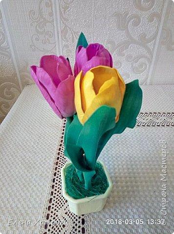 Тюльпаны фото 4