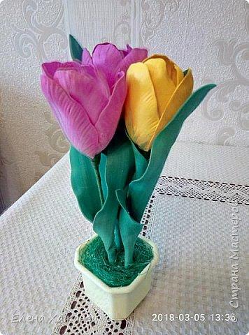 Тюльпаны фото 6