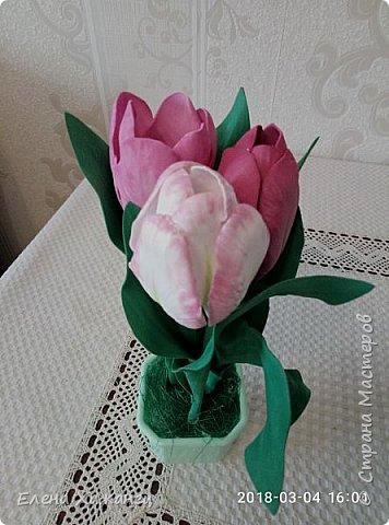 Тюльпаны фото 10